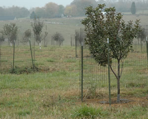 New Piper's Orchard Trees, 2007